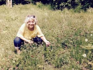 harvesting red clover