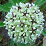 Native Texas Herbs